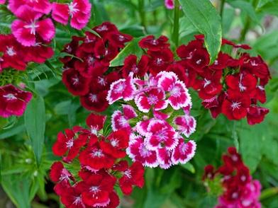 Blumenarten Verzeichnis Liste Bekannter Blumensorten Erklärung