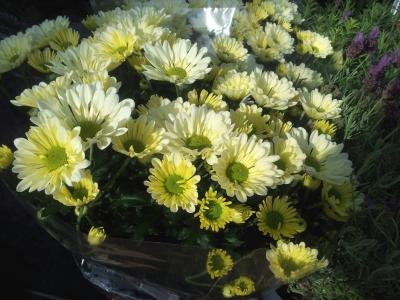 chrysantheme beschreibung und herkunft der blumenart. Black Bedroom Furniture Sets. Home Design Ideas