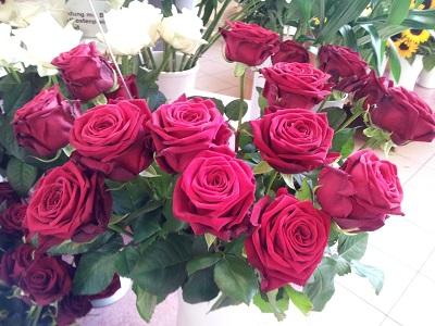 rosen beschreibung und infos zur blumenart rose aussehen und merkmale von rosen. Black Bedroom Furniture Sets. Home Design Ideas